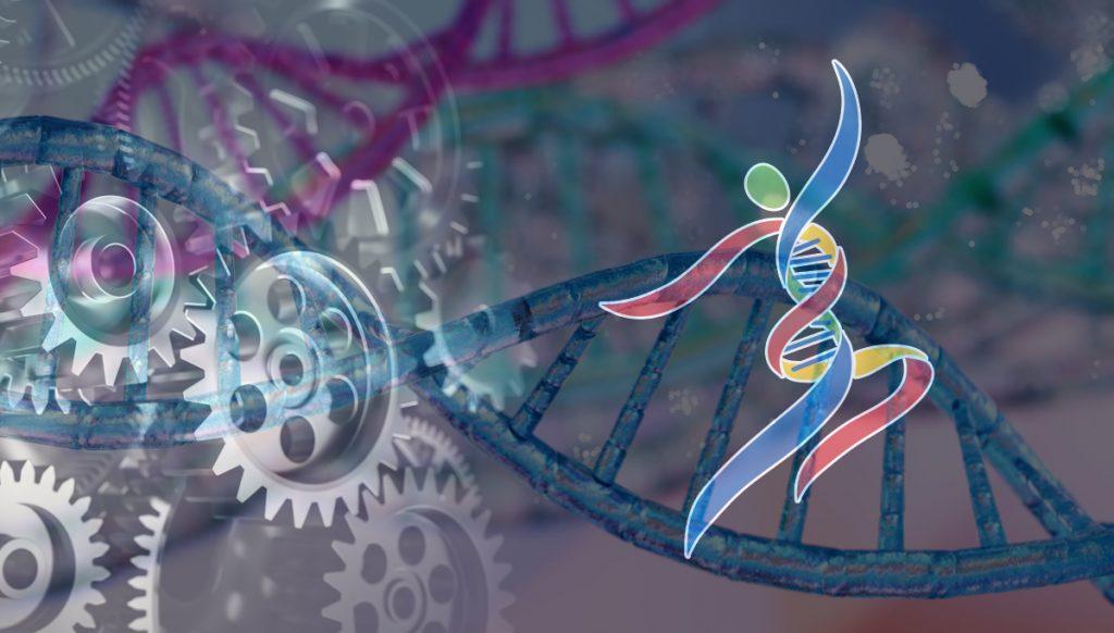DNA Mechanical Workings MyHappyGenes